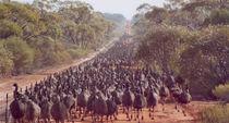 EmuArmy