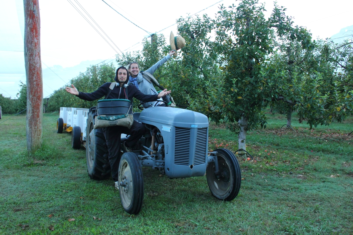 Travailler en ferme de pommes