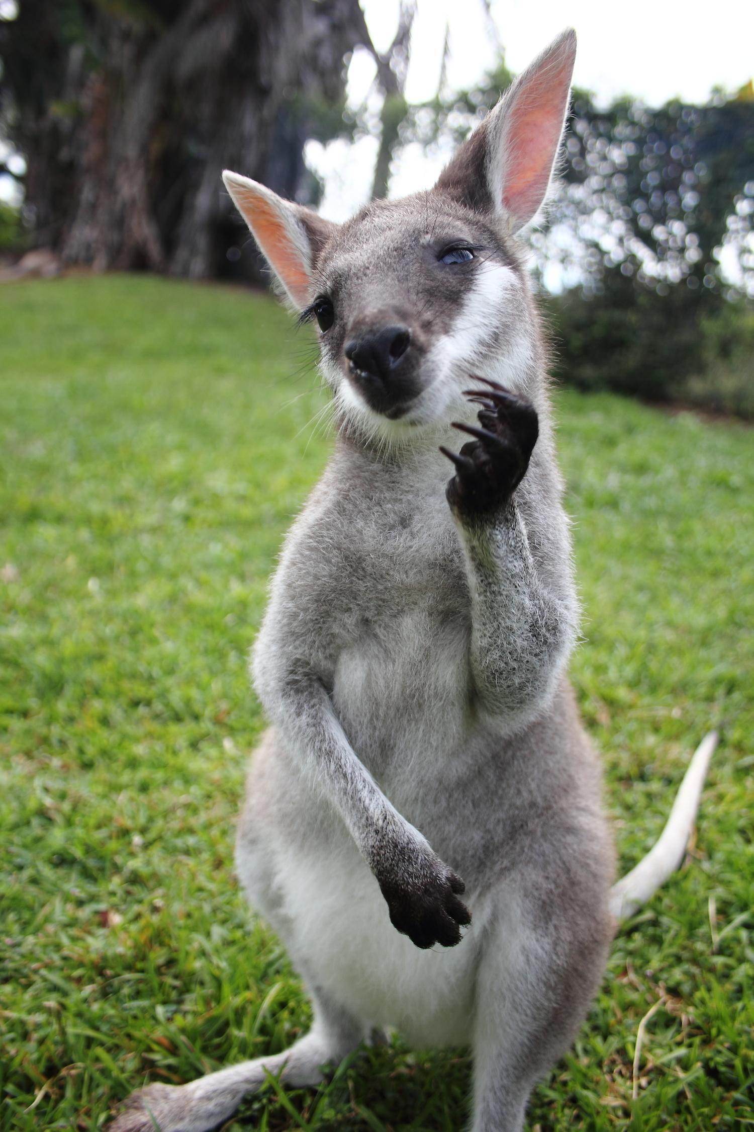 0decd258208d Travailler dans un refuge de kangourous – AvosSacs