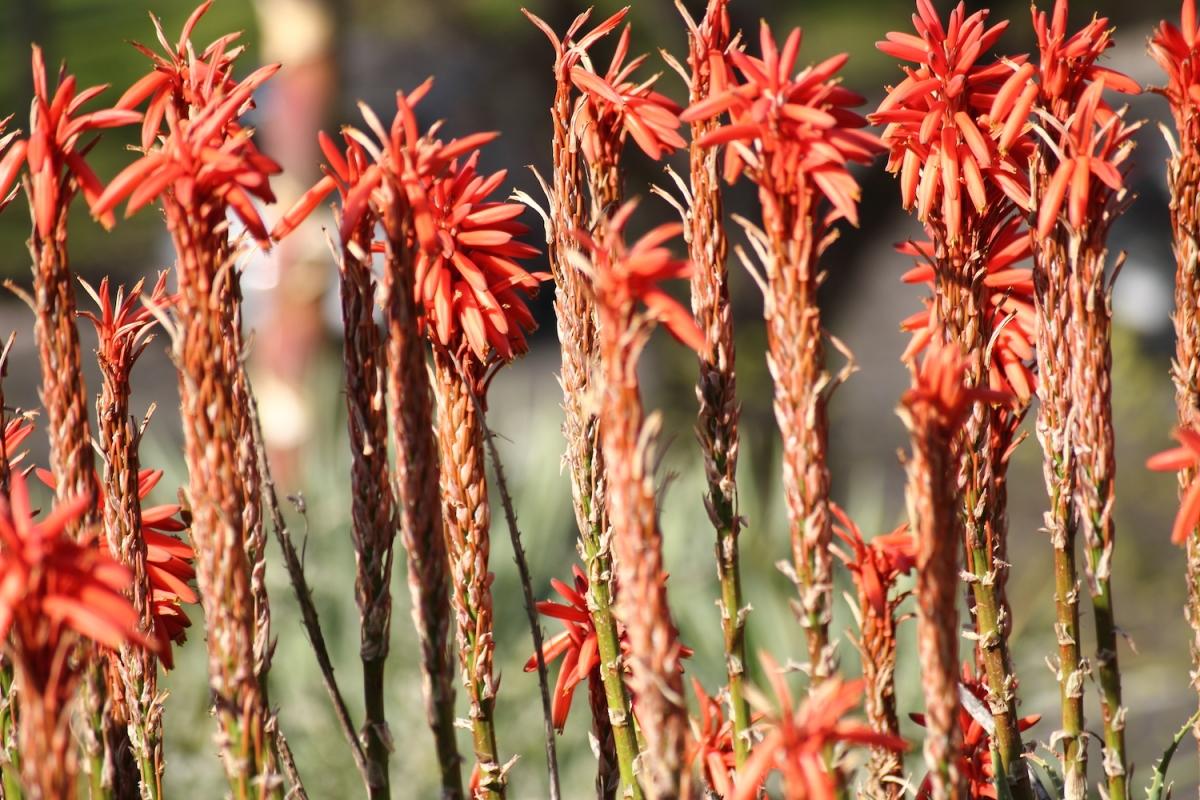 Fenêtre sur la flore australienne
