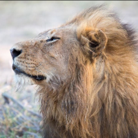 12 conseils pour réussir ses photos de la vie sauvage