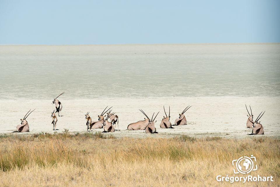 oryx etosha natipark namibie
