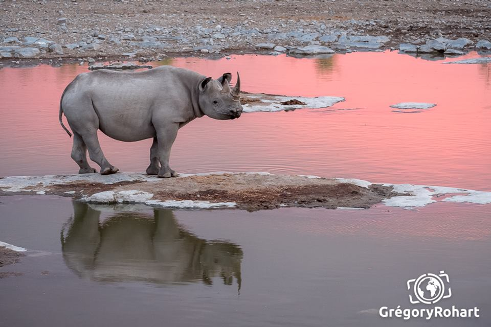 rhinoceros namibie